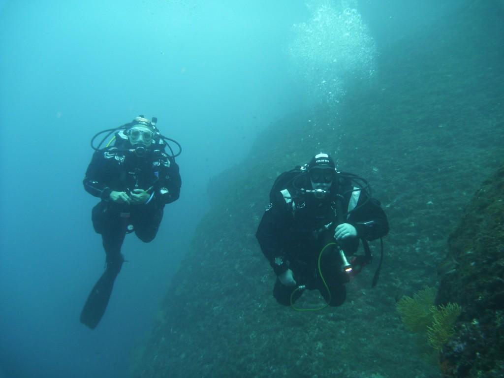Deux spécimens de ces fameux mammifères marins...
